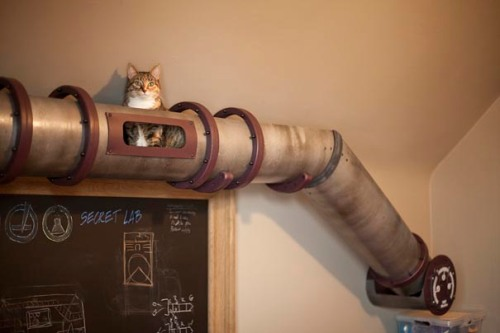 Steampunk-Inspired-Cat-Tunnel-System-1