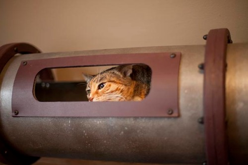 Steampunk-Inspired-Cat-Tunnel-System-3