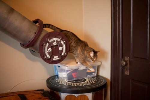 Steampunk-Inspired-Cat-Tunnel-System-4