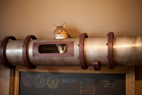 Steampunk-Inspired-Cat-Tunnel-System-5